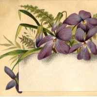 Violets Flower Label
