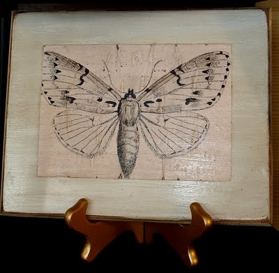 plaquebutterfly