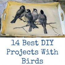 Best DIY Projects with Birds