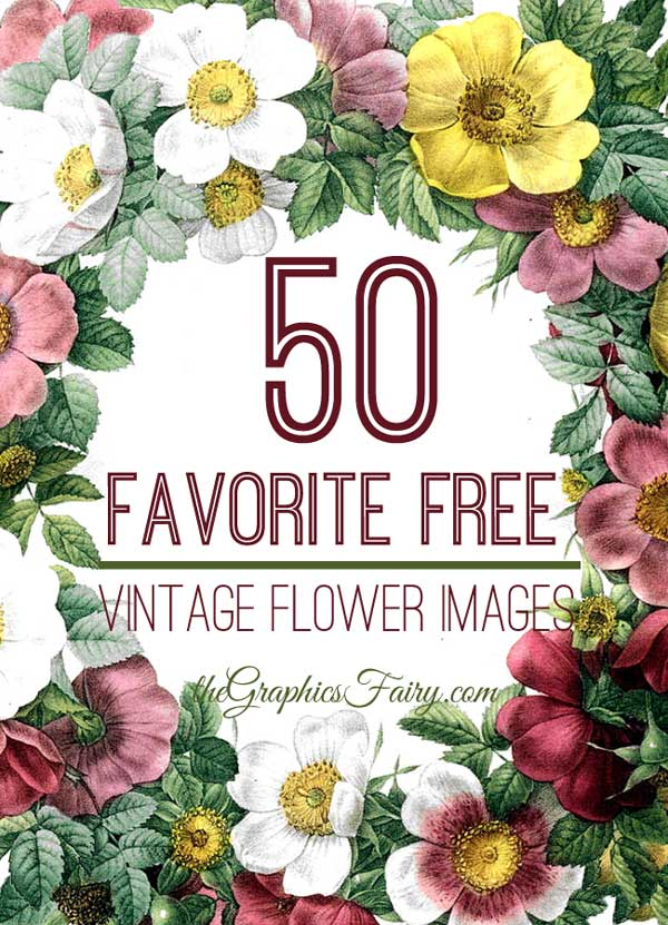 picture regarding Free Vintage Printable identified as 50 Most loved No cost Basic Flower Shots! - The Graphics Fairy