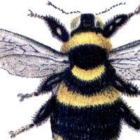 Bumblebee Clip Art