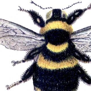 Marvelous Bumblebee Clip Art Image!
