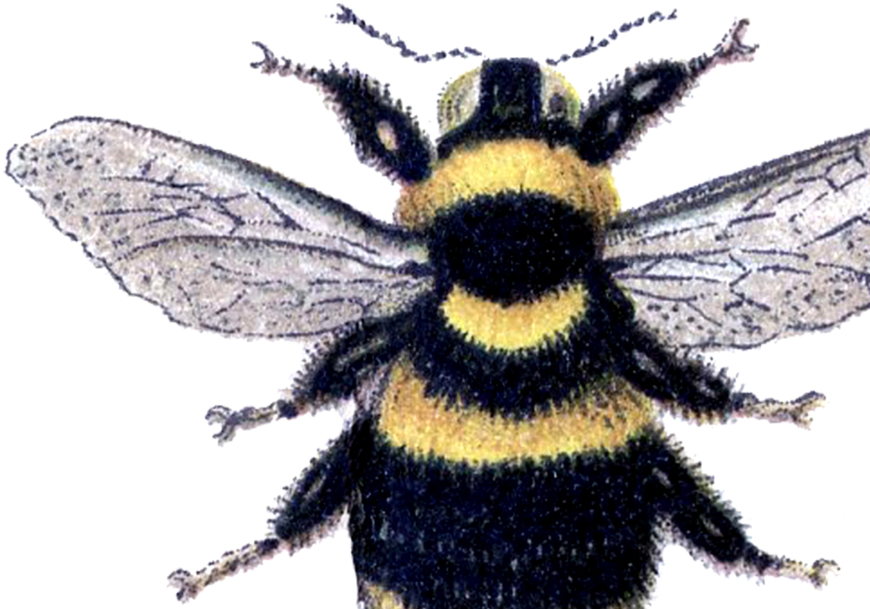 15 Bee Images Honey And Bumble The Graphics Fairy