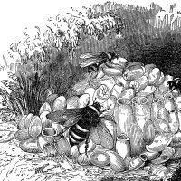 Bumblebee Nest Image