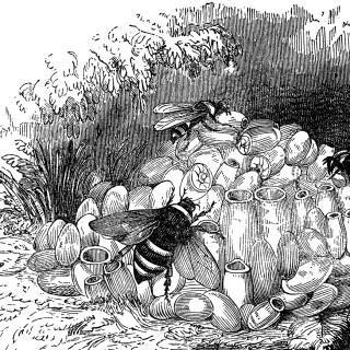 Splendid Bumblebee Nest Image!