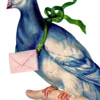 Carrier Pigeon Image