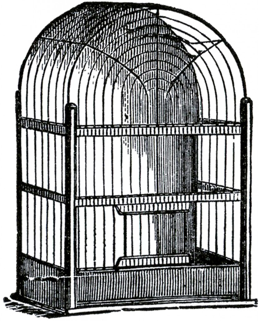 Dome Top Bird Cage Image