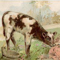 Free Vintage Calf Image