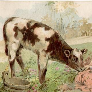 Free Vintage Calf Image – Super Sweet!