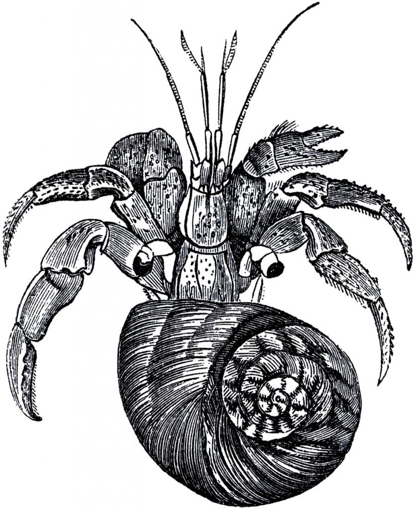 Free Hermit Crab Stock Images