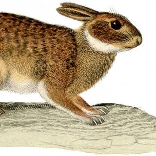 Wonderful Natural Rabbit Image!