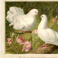 Vintage Easter Doves Picture