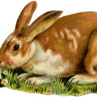 Vintage Spotted Bunny Image