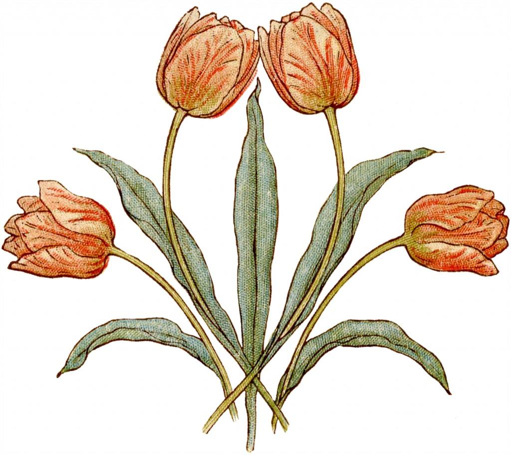 Vintage Tulips Illustration