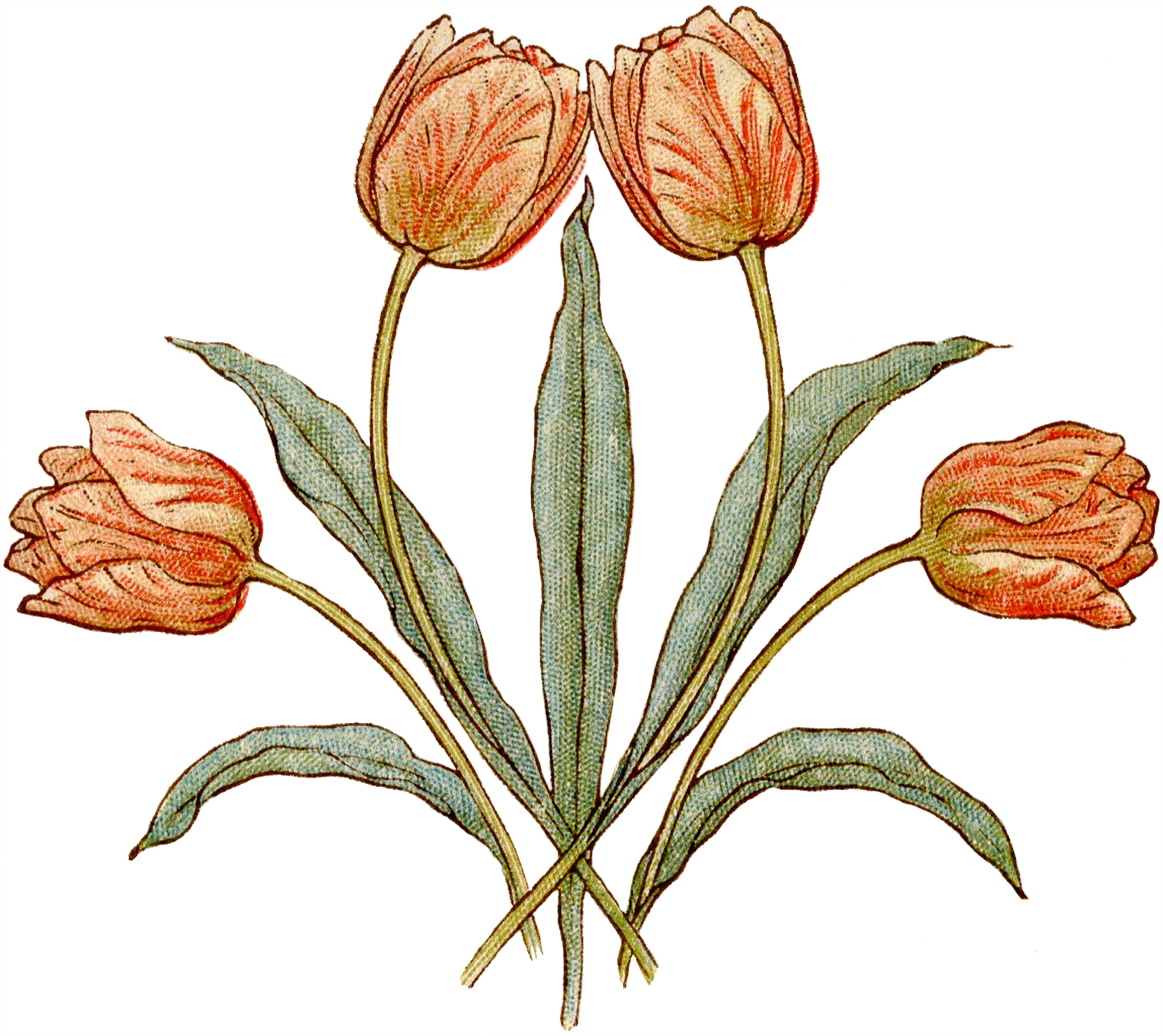 Pretty vintage tulips illustration the graphics fairy for Graphics fairy