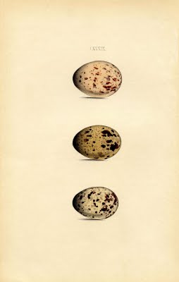 morris+eggs+brown+vintage+graphic--graphicsfairy2bsm