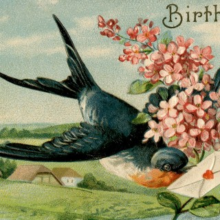 Birthday Swallow Image – Extra Pretty!