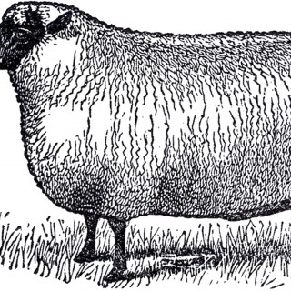 Primitive Vintage Sheep Image