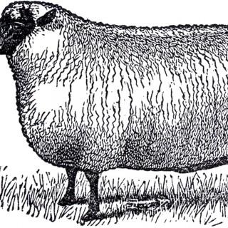Primitive Vintage Sheep Image