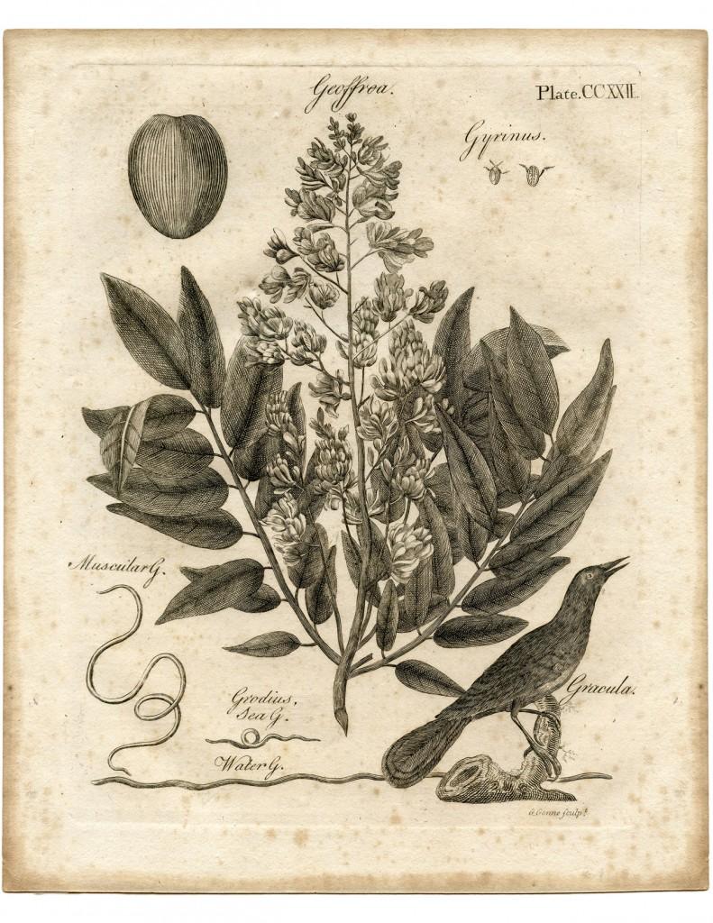 Early Botanical Printable
