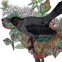 Vintage Catbird Image