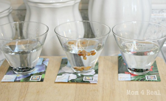 Clip-seeds-then-soak-in-water-overnight-for-fast-germination