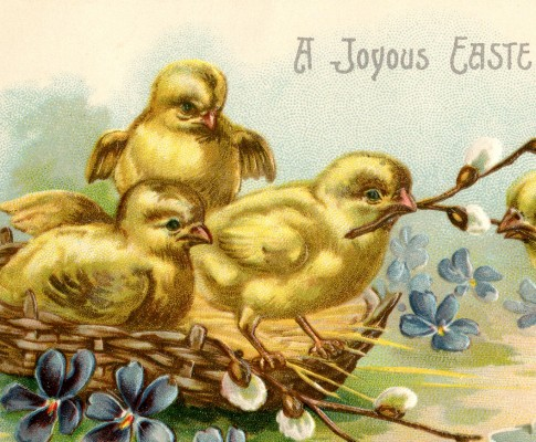 Adorable Easter Chicks Graphic