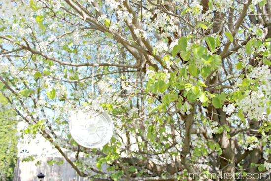 Hang an aluminum pan in fruit trees to keep birds from eating the fruit
