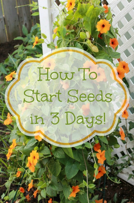 How-to-start-seeds-in-3-days