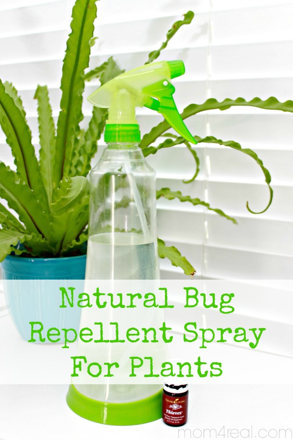 Natural Insect Repellent Spray for Plants