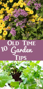 Old Fashioned Gardening Tips