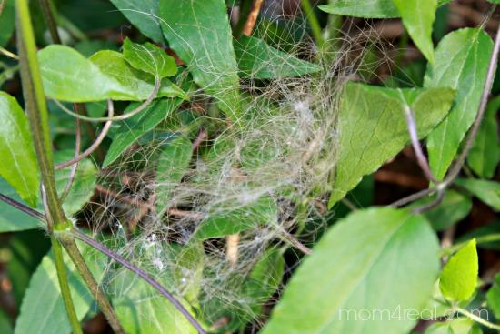 Place human hair near plants to keep rabbits away