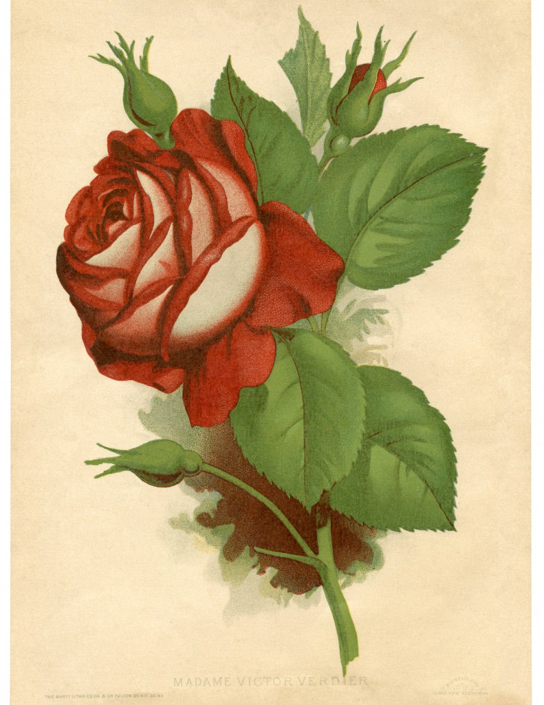 Red Rose Vintage Printable