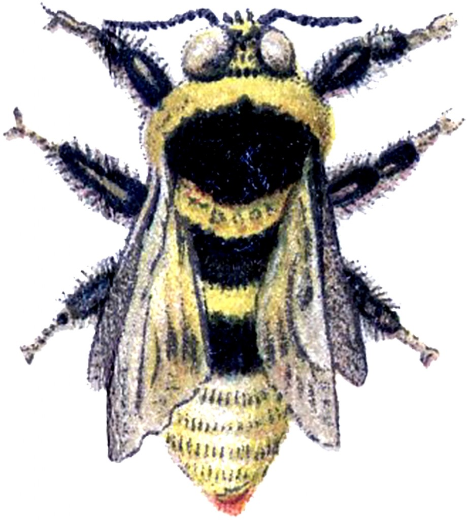 clipart french bee - photo #6
