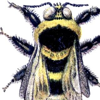 Wonderful Vintage Bumblebee Image!