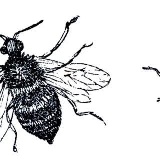 Vintage Bees Sketch