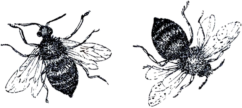 vintage bee clip art - photo #20