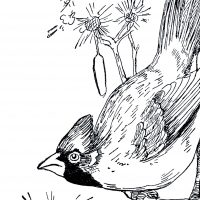 Vintage-Cardinal-Image-GraphicsFairy-thumb