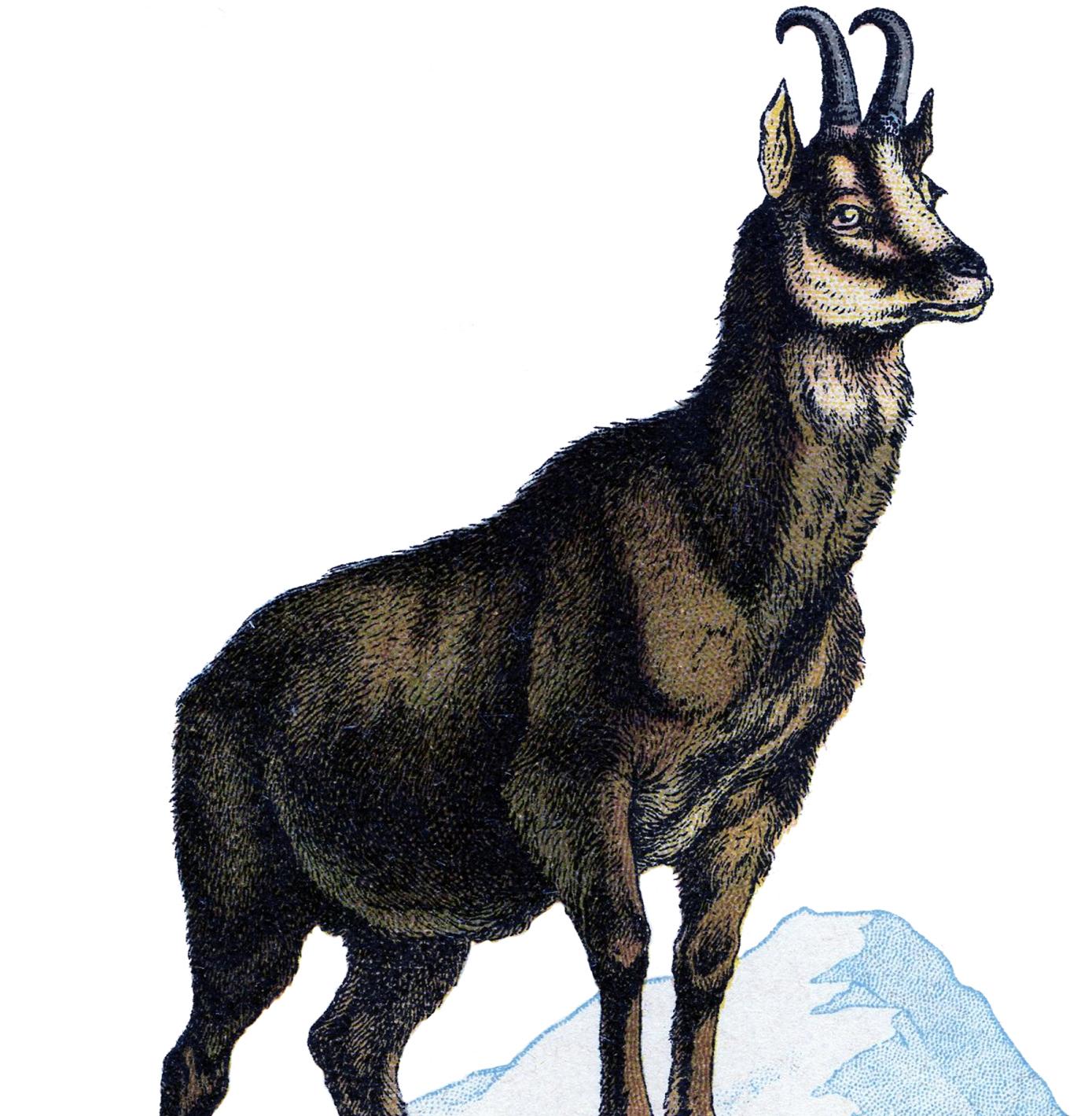 Vintage Goat Clip Art