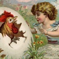 Vintage Chicken Hatching