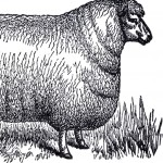 Vintage Sheep Clip Art