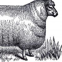 Vintage Sheep Clip Art