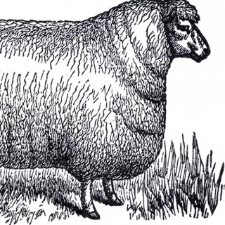 Vintage Sheep Clip Art – White and Black