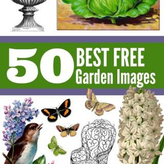 50 Favorite Gardening Images