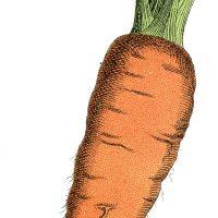 Free Carrot Image