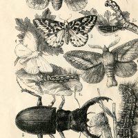 Natural History Insects Printable