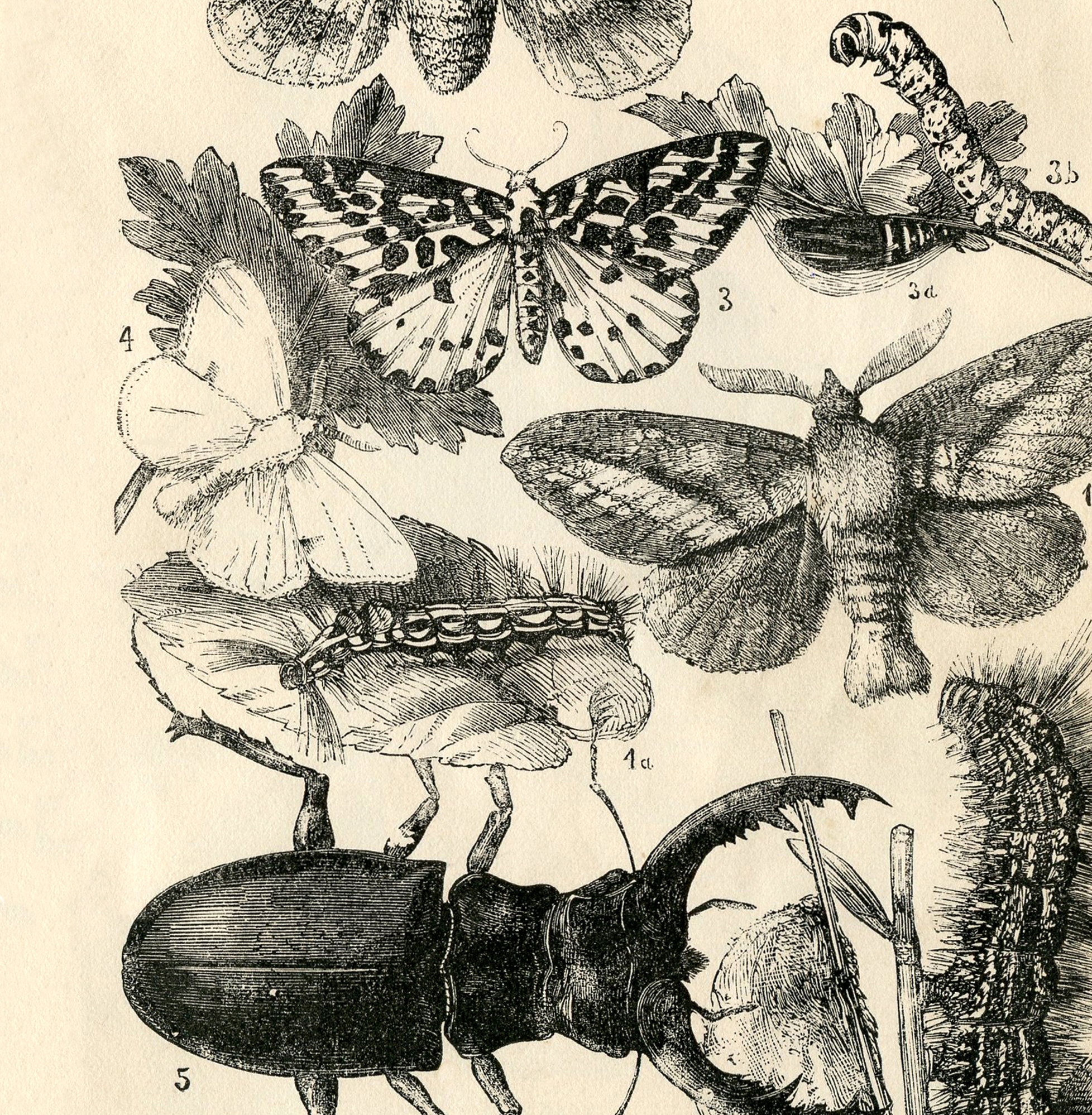 natural history insects printable the graphics fairy