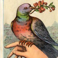 Victorian Bird on Hand Image