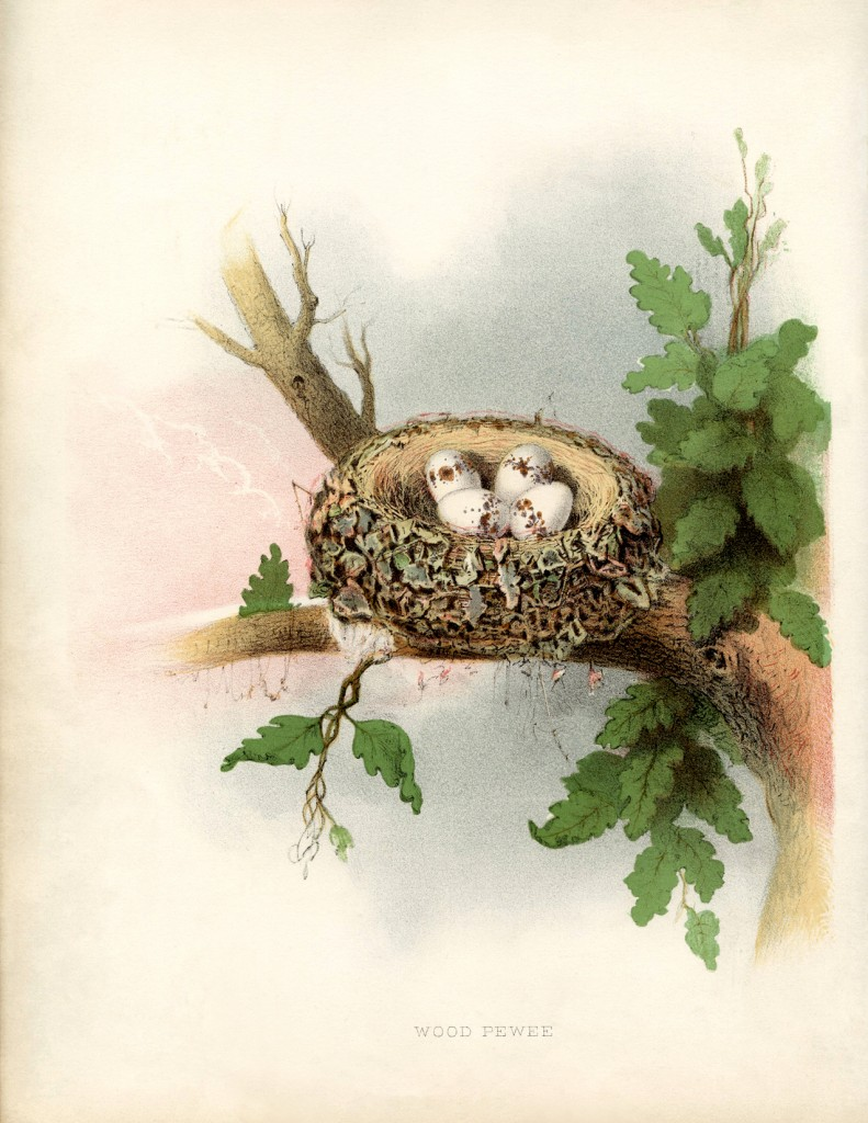 Vintage Nest with Eggs Picture