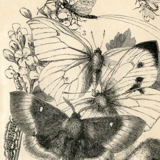 Vintage Printable Things with Wings